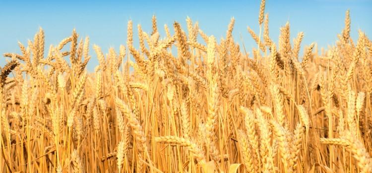 The ABC of GMO
