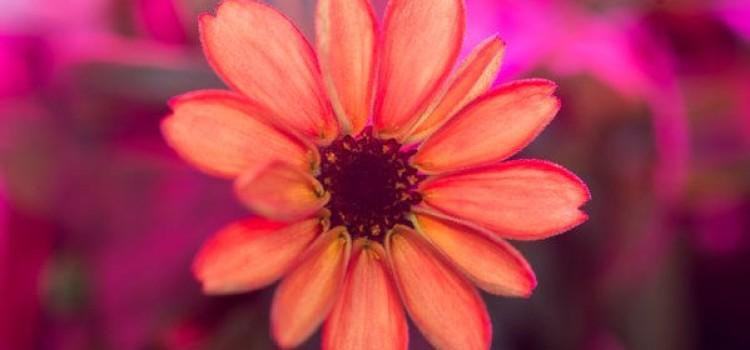 Space Gardening Undergoes New Hardships and Experiments