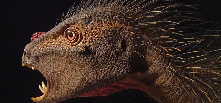 New Arctic Dwarf Dinosaur not a Dwarf