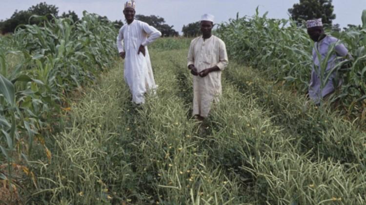 30 Killed in Nasarawa Feud Between Fulani Herdsmen and Agatu Farmers
